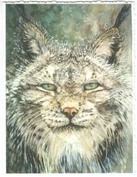 Gloria Masse Lynx Greeting Card Watercolor