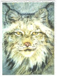 Gloria Masse Winter Lynx Greeting Card Watercolor